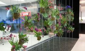 Botanic Art performance, Madrid