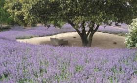 Garden in Somosaguas, Madrid
