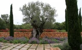 Estate in Mallorca